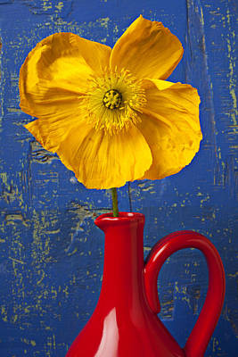 Yellow Iceland Poppy Red Pitcher Art Print by Garry Gay