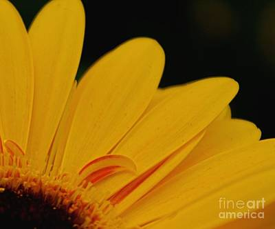 Photograph - Yellow II by Louise Fahy