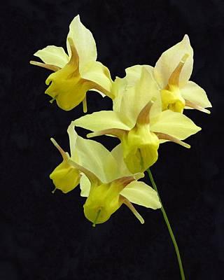 Photograph - Yellow by I'ina Van Lawick