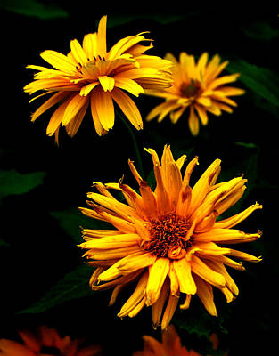 Flowers Photograph - Yellow In Bloom by Emily Stauring