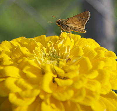 Photograph - Yellow In Nature by Brenda Redford