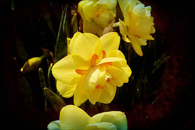 Photograph - Yellow In Nature by Milena Ilieva