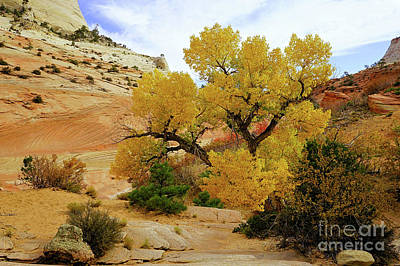Photograph - Yellow In The Park by Roxie Crouch