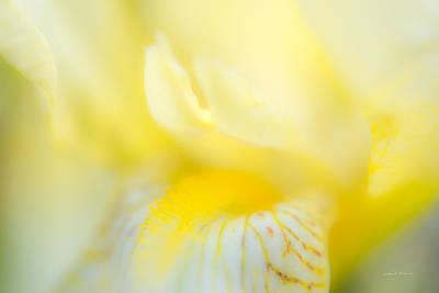 Photograph - Yellow Iris 6 by Leland D Howard