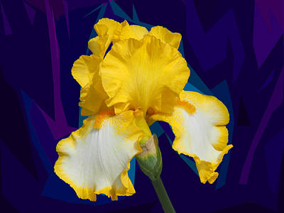 Photograph - Yellow Iris by C H Apperson