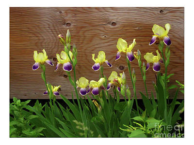 Photograph - Yellow Iris Flowers by Tatiana Travelways