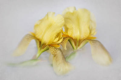 Photograph - Yellow Iris Repeat by David and Carol Kelly
