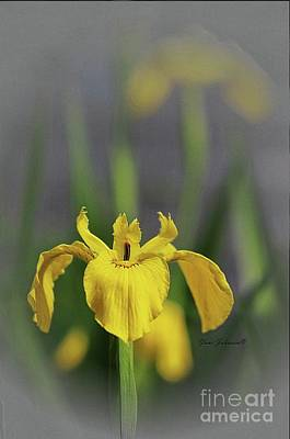 Photograph - Yellow Japanese Iris by Yumi Johnson