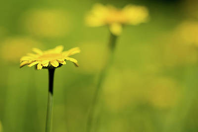 Photograph - Yellow by Jay Stockhaus