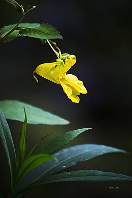 Photograph - Yellow Jewel Weed by Christina Rollo