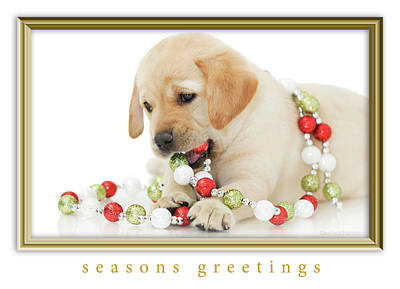 Photograph - Holiday Puppy Seasons Greetings by Kelly Richardson