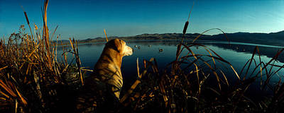 Clear Sky Photograph - Yellow Labrador Retriever by Panoramic Images