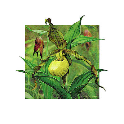 Wild Flowers Painting - Yellow Lady Slipper by JQ Licensing