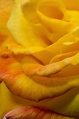 Photograph - Yellow Layers by Mary Jo Allen