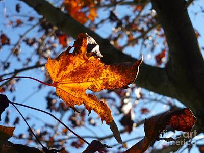Photograph - Yellow Leaf 1 by Jeff Breiman