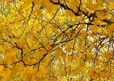 Photograph - Yellow Leaf by Jennifer Lake