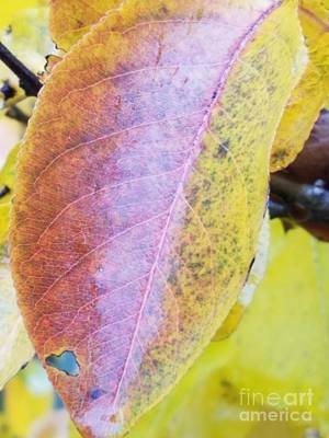 Photograph - Yellow Leaf by Maria Urso