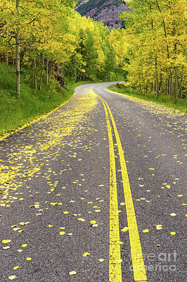 Photograph - Yellow Leaf Road Near Aspen Co by Tibor Vari