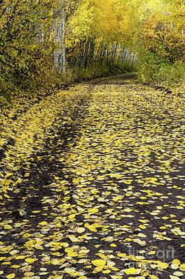 Photograph - Yellow Leaf Road Near Ouray Colorado by Tibor Vari