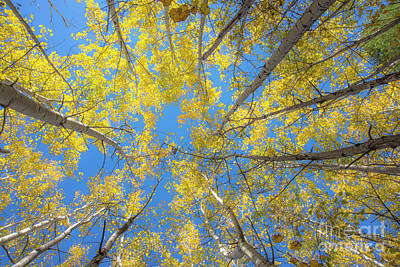 Photograph - Yellow Leaves by Alana Ranney