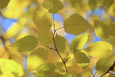 Photograph - Yellow Leaves. by Digiblocks Photography