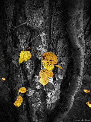 Photograph - Yellow Leaves by Iowan Stone-Flowers