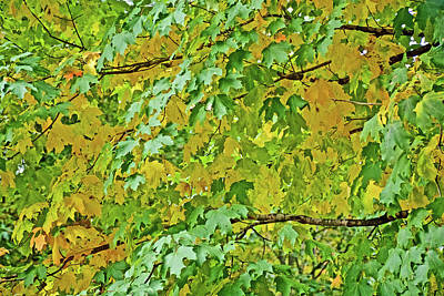 Photograph - Yellow Leaves On Trail To North Beach Park In Ottawa County, Michigan by Ruth Hager