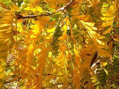 Photograph - Yellow Leaves by Stephanie Moore