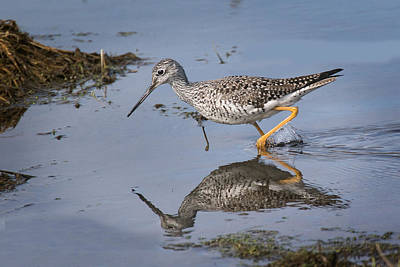 Photograph - Yellow Legs  by Don Anderson
