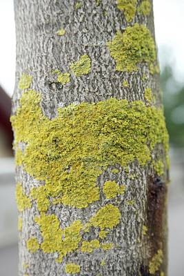 Photograph - Lichen 4 by Colleen Williams