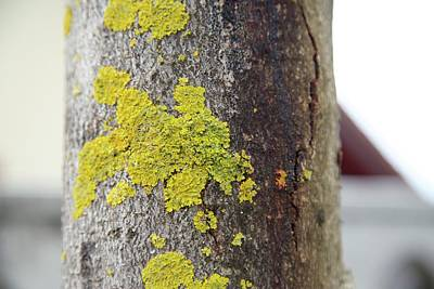 Photograph - Lichen 5 by Colleen Williams