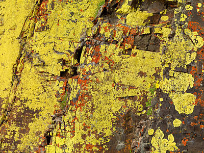 Photograph - Yellow Lichens 2 by Leland D Howard