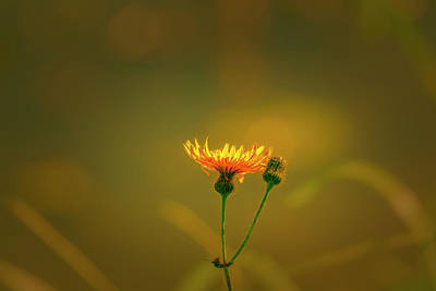 Photograph - Yellow Light #8  by Leif Sohlman