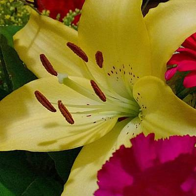 Yellow Photograph - #yellow #lily Detail. Love The Pollen by Shari Warren