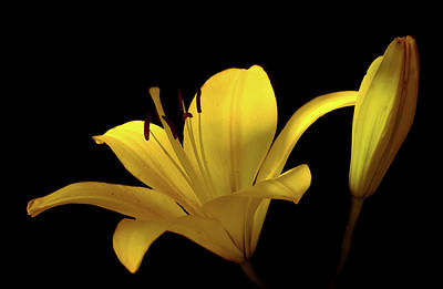 Photograph - Yellow Lily Flower by Lilia D