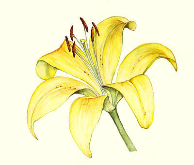 Painting - Yellow Lily by Heidi Kriel