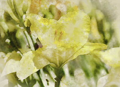 Photograph - Yellow Lily In The Garden Digital Art Watercolor by Brandon Bourdages