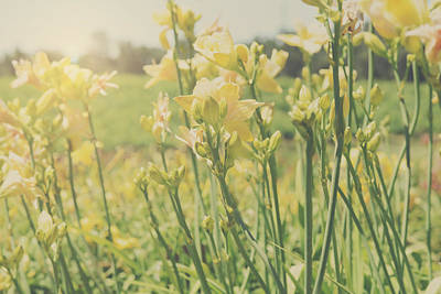 Photograph - Yellow Lily In The Garden With Retro Style Filter by Brandon Bourdages
