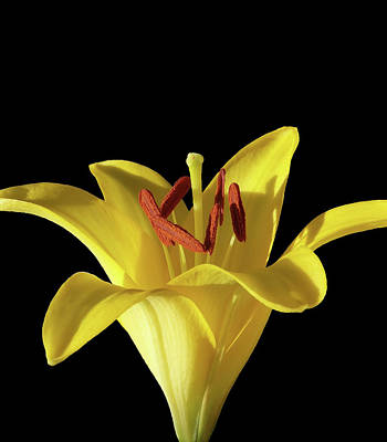 Photograph - Yellow Lily Macro 2 by Johanna Hurmerinta