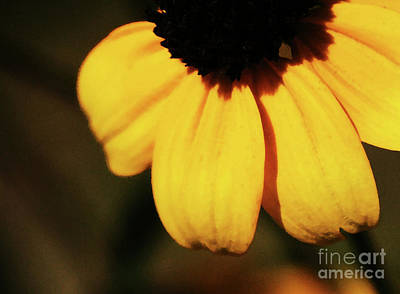 Photograph - Yellow by Linda Shafer