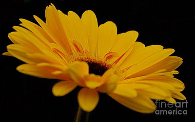 Photograph - Yellow by Louise Fahy