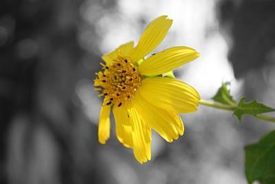 Photograph - Yellow by Mandy Shupp
