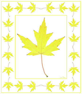 Digital Art - Yellow Maple Leaf With Border by Lise Winne