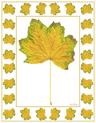 Digital Art - Yellow Maple Leaf With Green Edges And Border by Lise Winne
