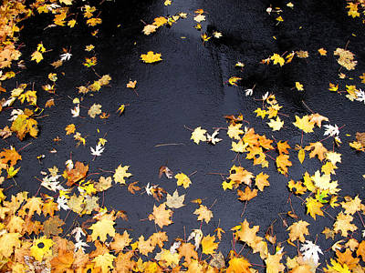 Yellow Maple Leaves On Pavement  Art Print by Lyle Crump