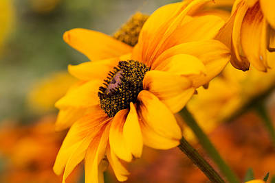 Photograph - Yellow by Mary Jo Allen