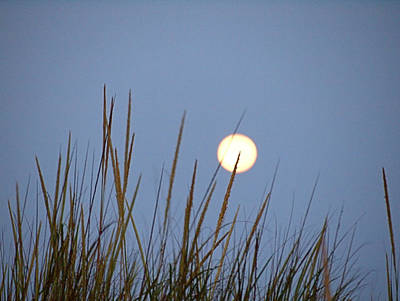 Photograph - Yellow Moon by  Newwwman