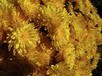 Photograph - Yellow Mum Bouquet by Scott Hovind