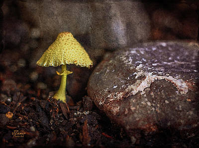 Photograph - Yellow Mushroom by Jim Ziemer
