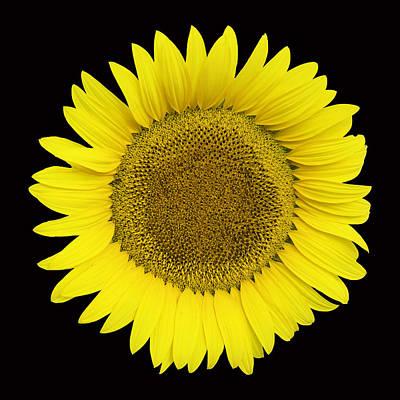 Photograph - Yellow On Black by Jim Dollar